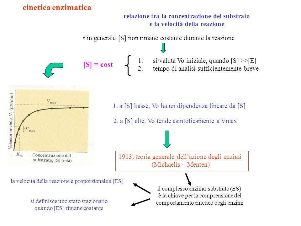 cinetica enzimatica [S] = cost